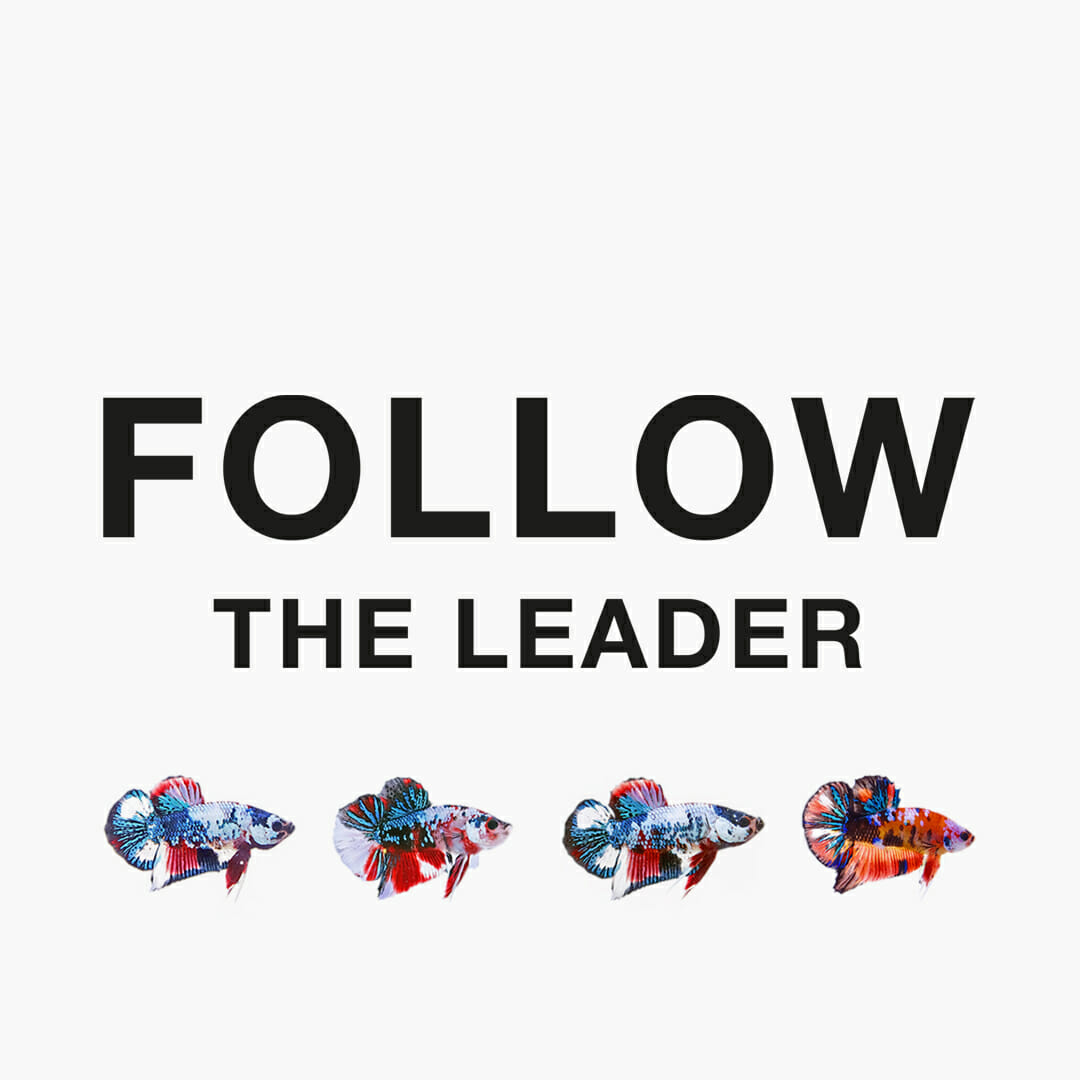 Follow the leader…